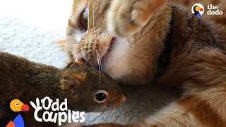 Download Cat Is SO Gentle With His Squirrel Brother | The Dodo Odd Couples Video
