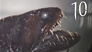 Download Top 10 Creepy Deep Sea Creatures Video