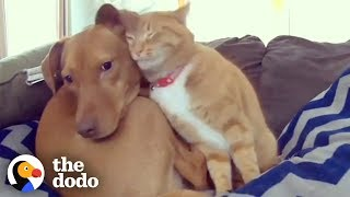 Download Hidden Camera Catches Cat Comforting Anxious Dog While Family's Away | The Dodo Odd Couples Video