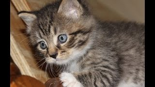 Download Rescuing a kitten trapped in the walls of an abandoned hospital Video