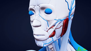 Download 7 Organs You Could Totally Live Without Video