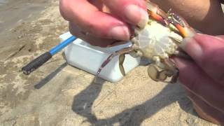 Download Walking Sideways: The Remarkable World of Crabs Video