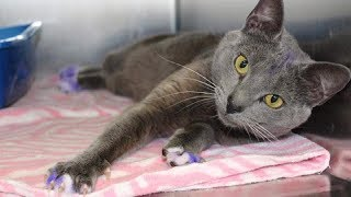 Download Never Ignore A Cat With Purple Painted Paws – Take It To The Nearest Shelter Immediately Video