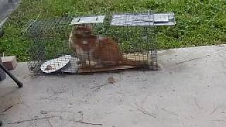 Download Feral Cat Trapping Video