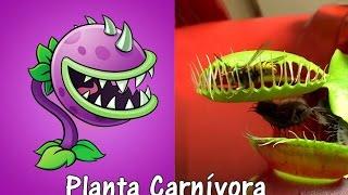 Download Plants Vs Zombies 2 Plantas en la Vida Real con Imágenes SEGUNDA PARTE Video