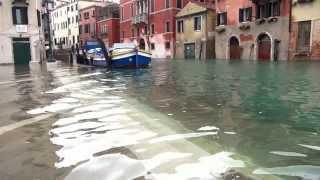 Download ACQUA ALTA in Libreria - Venezia Video