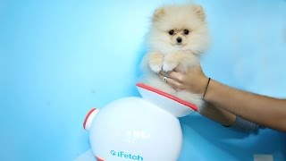 Download Testing Out Weird Dog Gadgets With NEW PUPPY! Video