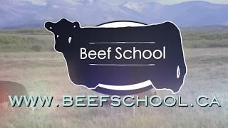 Download BEEF SCHOOL - Vaccination Video