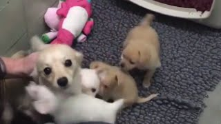 Download Mother Dog Elated After Reunited With Her Puppies Video