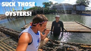 Download EATING FILIPINO GROWN OYSTERS ON BAMBOO FLOATING HOUSES (Philippines Seafood City) Video