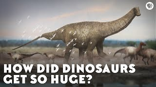 Download How Did Dinosaurs Get So Huge? Video