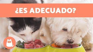 Download ¿Los gatos pueden comer comida de perro? 🙀 Video