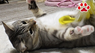 Download Cats turned into urine crystals【Cat's room,Miaou】 Video