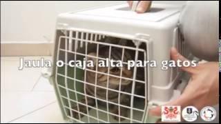 Download Que debemos tomar en cuenta antes de la esterilización de las mascotas.? Video