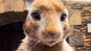 Download PETER RABBIT All Trailer + Movie Clips (2018) Video
