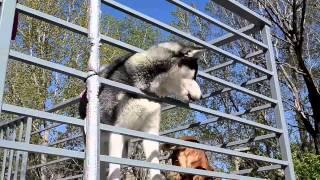 Download Tamaz Elizabarashvili Dog shelter tbilisi 2015 (bu Ruslan Mamedov ) Video