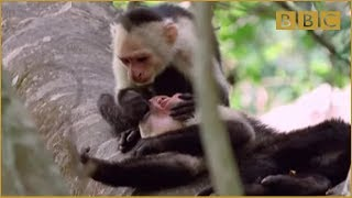 Download Funny Talking Animals - Walk On The Wild Side - Episode Three Preview - BBC One Video