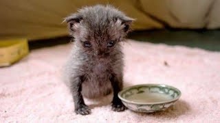 Download Woman Found Tiny Struggling Kitten After A Downpour, What She Does Next Incredible Video