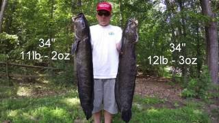 Download Best Snakehead Bowfishing Video Ever - GIANT Potomac River Snakeheads! Video