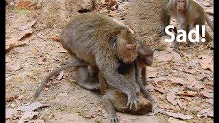 Download Tear Drop...! Maria hate her baby Kari   Maria push head Kari 0n ground not know reason. Video