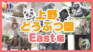 Download 上野動物園の動画🐾東園編🐻クマ🐘ゾウ🐹トラ🐼パンダなど🐾Ueno Zoo Video