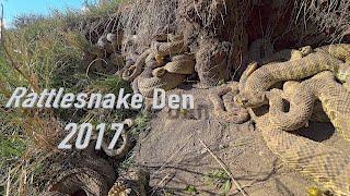 Download Rattlesnake Den in 4K Video