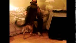 Download PTSD anger intervention by a Service Dog Video