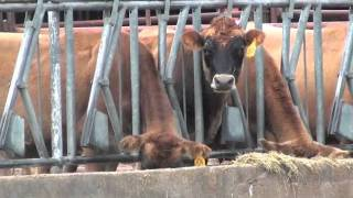 Download A Journey Through Animal Sciences at The Ohio State University Video