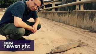 Download Hurricane Harvey: The aftermath - BBC Newsnight Video