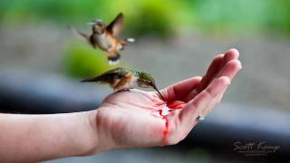 Download Hand feeding Hummingbirds Video
