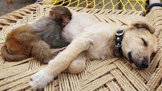 Download Top 10 Dogs and Monkey Pals Video