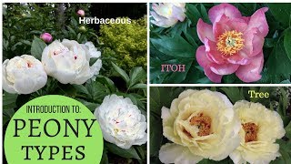 Download A basic introduction to PEONIES: Herbaceous peony, Tree Peony, Intersectional (ITOH) Video