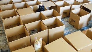 Download AMEOW-ZING 50 Box Cat Maze! Video