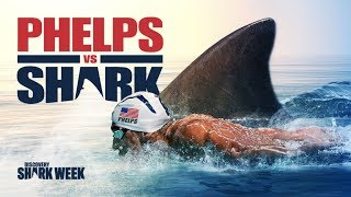Download Michael Phelps vs. Great White Shark!!! This race Will Shock You! Фелпс против Акулы! Video