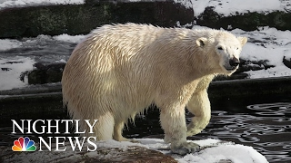 Download 2016 Was Hottest Year Ever: What's Behind The Numbers?   NBC Nightly News Video