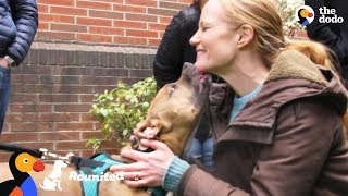 Download Dog Reunited With Foster Mom For The First Time Since Her Adoption | The Dodo Reunited Video