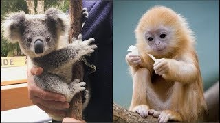 Download Funny Animals Compilation - Cutest Animals Ever Video