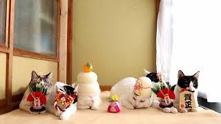 Download のせ猫 x 2018お正月 New Year cat 2018 Video
