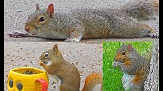 Download STUNNING Videos for Cats to Watch - Beautiful Birds, Squirrels, Rabbits, Chipmunks, Pigeons, Video
