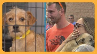 Download Tracy's Dogs Rescues Shelter Dogs From Euthanasia And Finds Them Forever Homes Video