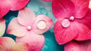 Download 6 Hour Relaxing Spa Music: Massage Music, Calming Music, Meditation Music, Relaxation Music, ☯2588 Video