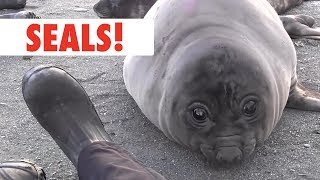 Download Breed All About It: Seals Video