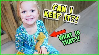 Download WE GET A REAL BEARDED DRAGON!! Video