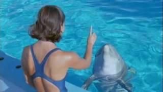 Download Wildlife on BBC -DOLFINS - DEEP THINKERS? -part 1/3 Video