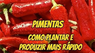 Download DICAS: COMO PLANTAR PIMENTA E TER PRODUÇÃO ABUNDANTE E RÁPIDA Video