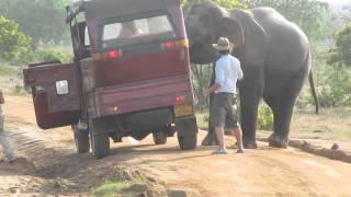 Download Sri Lanka - Yala National Park - Elephant Video