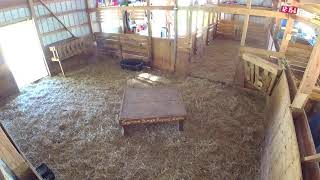 Download Live Working Goat Barn Camera - Baby Goats Video
