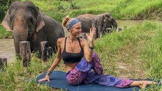 Download Vinyasa Power Flow Class ♥ 20 Minute Yoga   Cambodia Wildlife Sanctuary Video