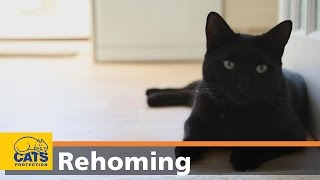 Download How to adopt a cat in three easy steps – Cats Protection video Video