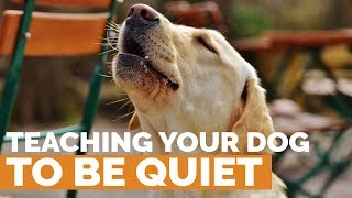 Download Teach Your Dog to Be QUIET! Video